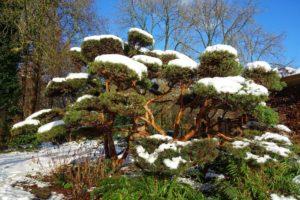 Natural Tree Design